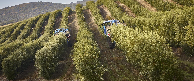 Casas de Hualdo - Un proceso - La cosecha - La precisión 1