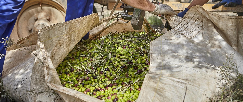 Casas de Hualdo - Un proceso - La cosecha - La precisión 2