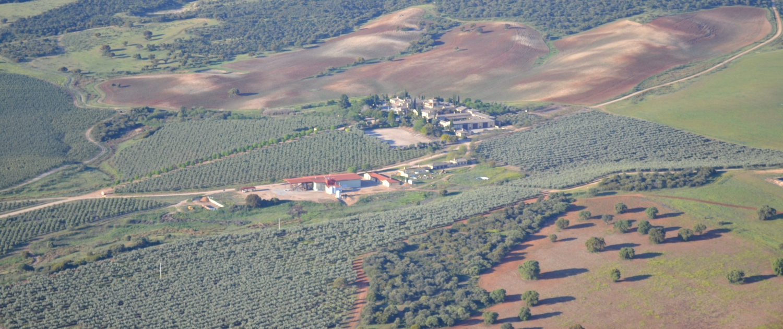 Casas de Hualdo - Un proceso - Olivar - La esencia 1
